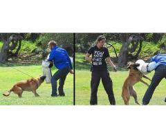 Family Protection Dog Training
