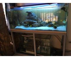 6 ft marine tank