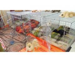 Flat folding Dog Crates.Pls read below..